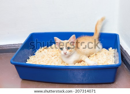 Young cat use the toilet pan filled  - stock photo