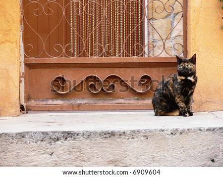 Young cat waits on the door of house - stock photo
