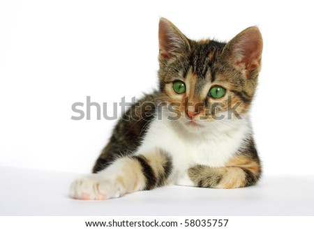young cat with green eyes - stock photo