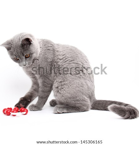 Young cat with red toy/Playful young cat - stock photo