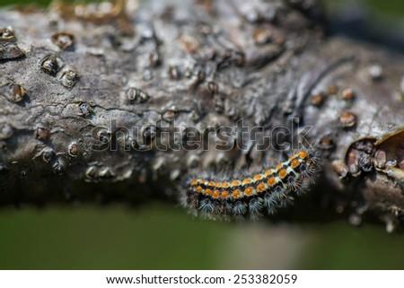 young caterpillar - stock photo