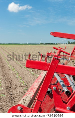 Young cauliflower plants in agriculture landscape at spring
