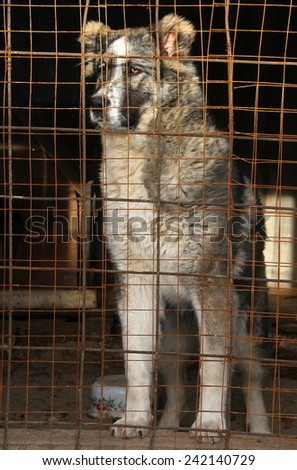 Young Central Asian Shepherd Dog in a cage - stock photo