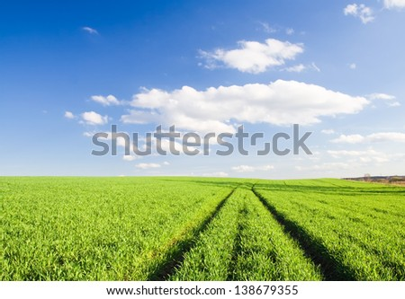 young cereal field with tractor traces - stock photo