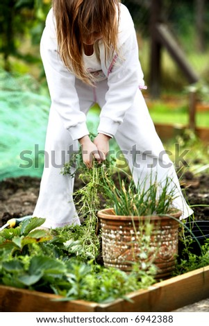 Young child helping pulling weeds out of the garden - stock photo