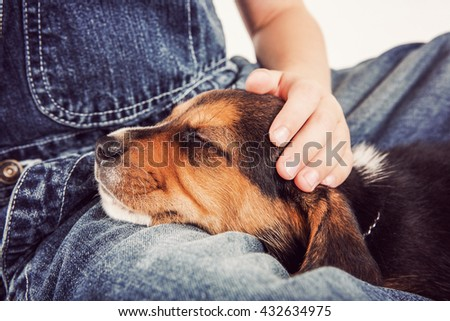 Young child petting a sleeping beagle puppy - stock photo