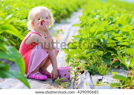 Young children picking strawberries in the farm. Small toddler girl harvesting healthy berries in the garden. Healthy bio food concept - stock photo