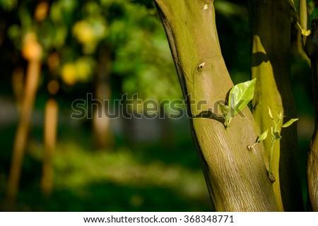 Young citrus tree - stock photo
