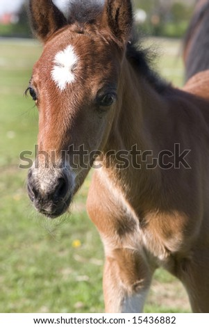 Young colt standing in a farm pasture