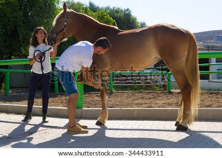 Young couple checks the hoofs of a brown female horse at the stables of a horse riding club, preparing it for a ride.Selective focus. Sports and lifestyle concept. - stock photo