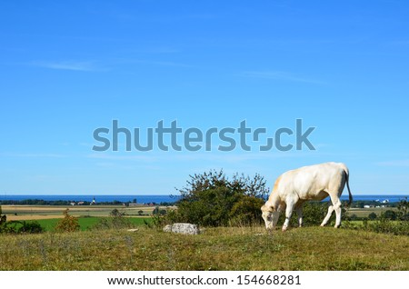 Young cow grazing with nice view over a rural landscape - stock photo