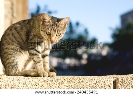 Young curious cat standing on the wall and looking at something.