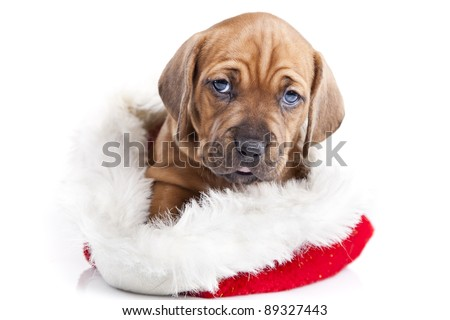 Young cute doggy and Christmas decoration - stock photo