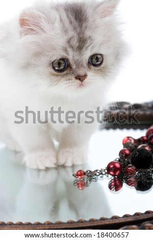 Young cute Kitten and mirror with jewelery - stock photo