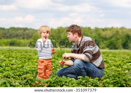 Young dad and little kid boy, his son having fun on strawberry farm in summer. Happy Family of two eating healthy organic food, fresh berries. - stock photo