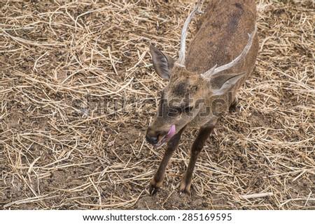 young deer - stock photo