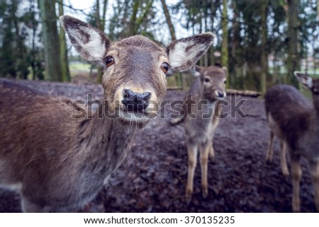 Young Deer in the Forest - stock photo
