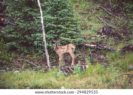 Young deer in the forest, USA. Natural photography. - stock photo