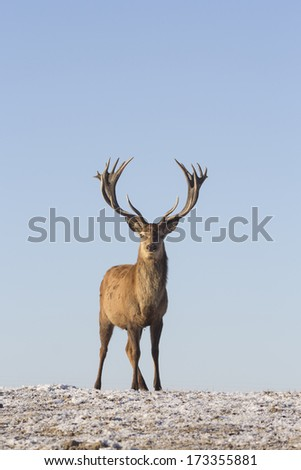 Young deer in winter in early morning - stock photo