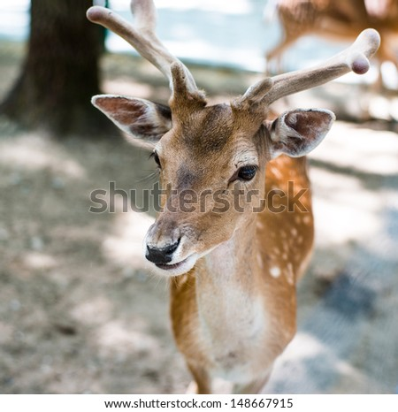 young deer looking at camera - stock photo