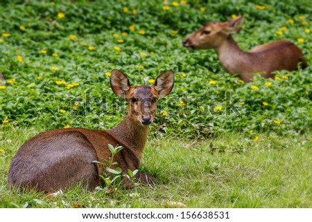 Young deer lying in the forest  - stock photo