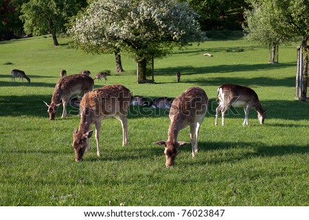 young deer on pasture - stock photo