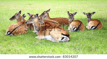 Young Deer resting on the Grass - stock photo