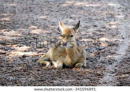 Young deer sitting in the park