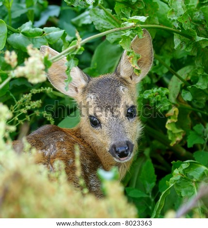 Young deer under cover - stock photo