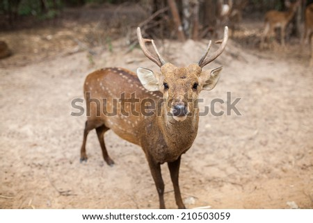 Young doe deer in forest - stock photo