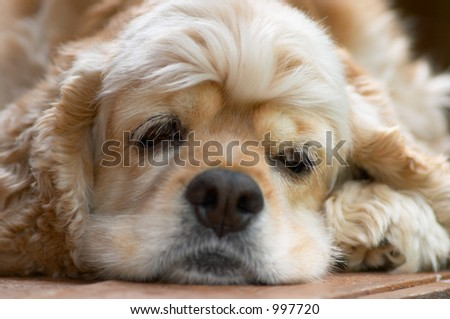 young dog looking sideways - stock photo