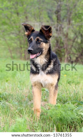 young dog on green grass