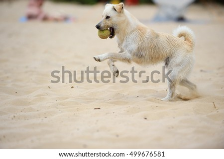 young dog playing on beach