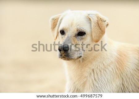 young dog portrait on beach