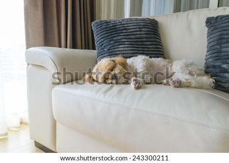 young dog sleeping on modern sofa in the living room - stock photo