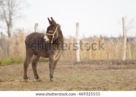 Young donkey on a farm