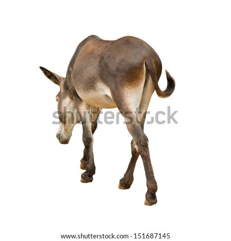 young donkey on white background - stock photo