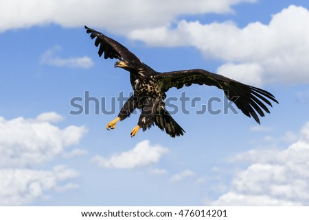 talons of the eagle preface