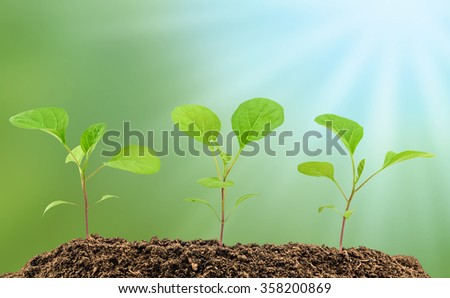 Young eggplant seedlings on the blurry background