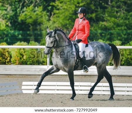 Stallions at Stud - Equine.com