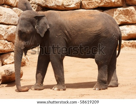 Young  elephant near a brick wall
