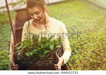 Young farmer woman holds a box of fresh green seedlings plants in greenhouse with a happy smile. She is satisfied of how her vegetable harvest grown in cultivated land under the sun in this hothouse.  - stock photo