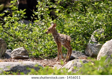 Young fawn looking lost in the forest.