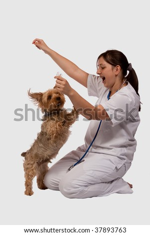 Young female brunette woman wearing medical uniform with a playful jumping small dog - stock photo