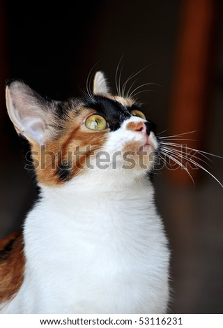 Young female colored cat looking up