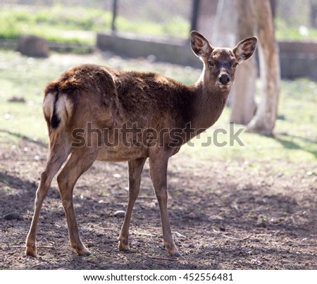 young female deer in a park on the nature