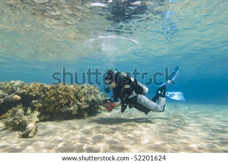 Young female diver in clear shallow water observing a coral reef. Sharm el Sheikh, Red Sea, Egypt.