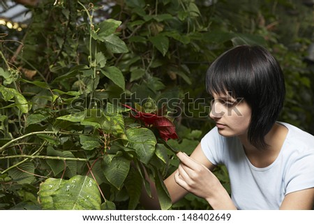 Young female gardener examining leaves in greenhouse - stock photo