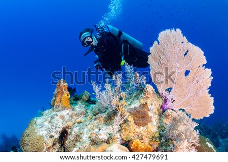 Young female SCUBA diver near a seafan on a tropical coral reef - stock photo