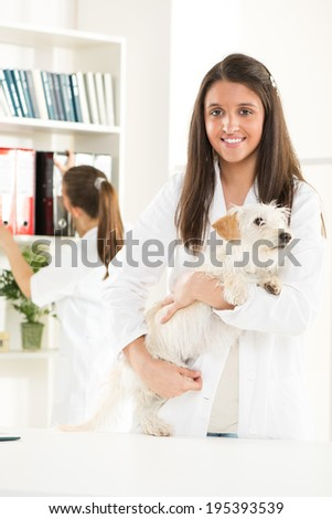 Young female vet with a cute beautiful dog. - stock photo